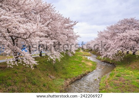 Cherry blossoms and stream, Japan - stock photo