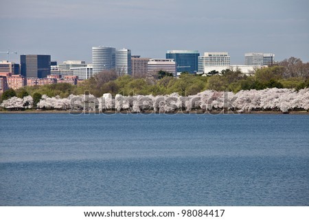 Cherry blossoms around the Tidal Basin in Washington DC near Jefferson Memorial with Rosslyn city skyline - stock photo