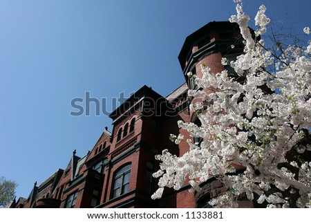 cherry blossoms on 17th - stock photo