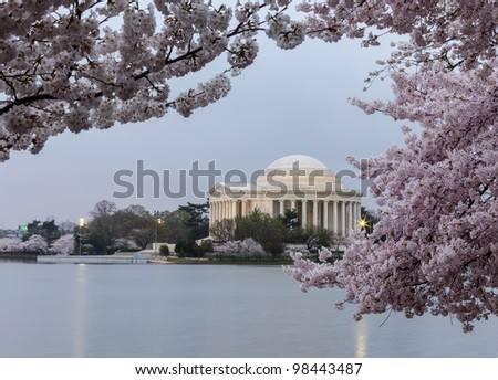 Cherry blossoms surround the Jefferson Memorial floodlit at dawn - stock photo