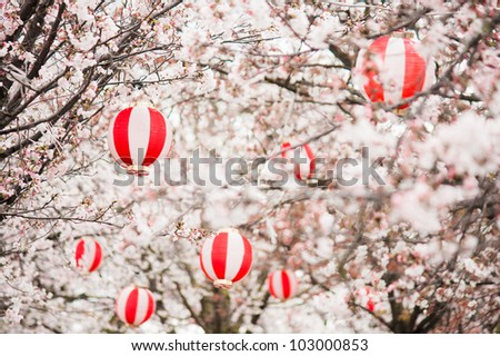 Cherry blossoms with Chinese lanterns in the trees - stock photo