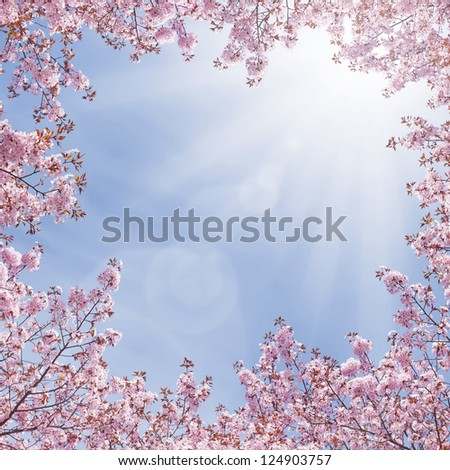 cherry tree blossoming - stock photo