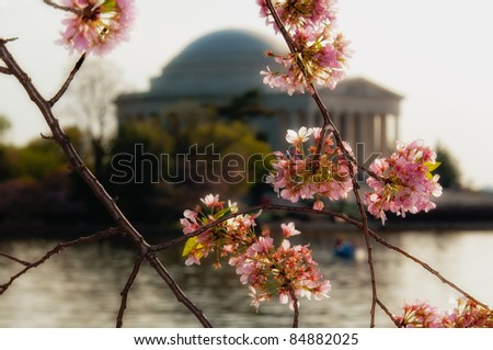 Cherry tree blossoms around the tidal basin with the Jefferson Memorial blurred in the background - stock photo