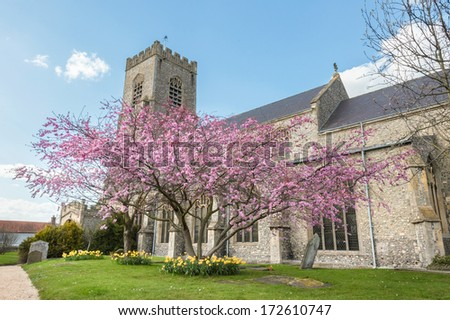 Cherry tree in full blossom in the parish churchyard of St Nicholas in Wells-next-the-sea, Norfolk, UK - stock photo