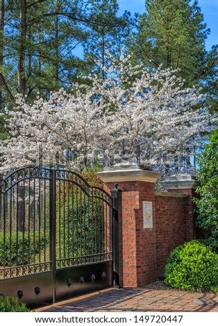 Cherry tree in spring by entrance gate - stock photo