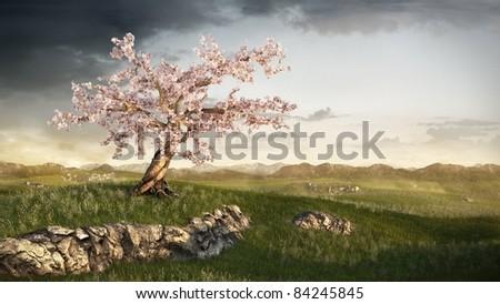 cherry tree on grassland - stock photo