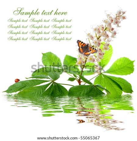 chestnut flower with butterfly - stock photo