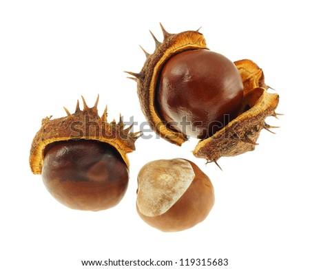 Chestnut fruits  isolated on a white background. - stock photo