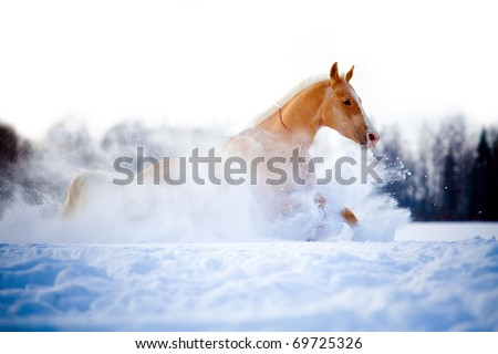 Chestnut horse run gallop in winter - stock photo