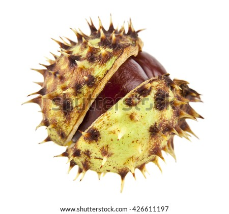 chestnut is isolated on a white background - stock photo