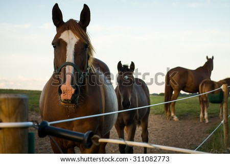 Chestnut mare and her foal looking into the camera - stock photo