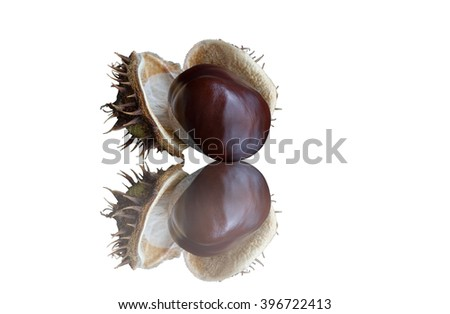 Chestnut on a white background. Isolated with path. - stock photo
