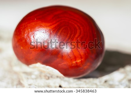Chestnut - seed - stock photo