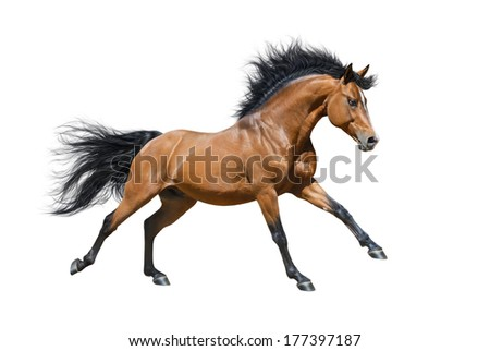 Chestnut stallion in motion on white background - stock photo