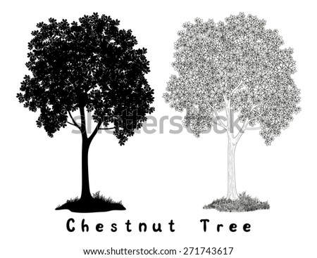 Chestnut tree Black Silhouette, Contours and Inscriptions Isolated on White Background.  - stock photo