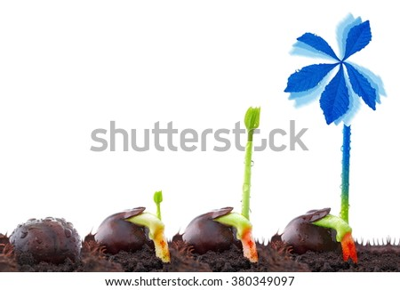Chestnut, wind power plant, sustainable development - stock photo