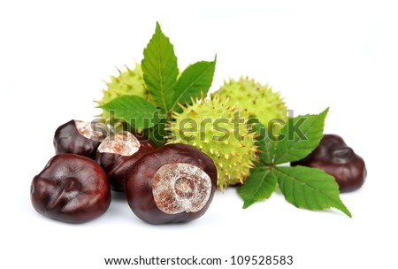 chestnut with leafs on white - stock photo