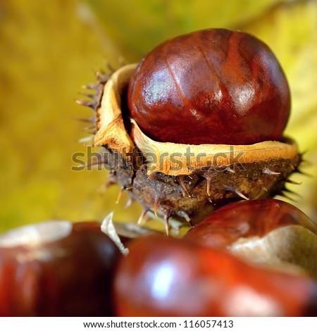chestnuts - stock photo