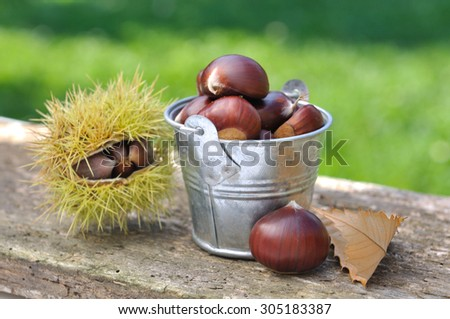 chestnuts in a small bucket on old plank - stock photo
