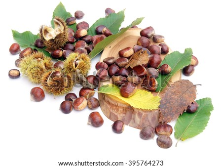 Chestnuts lying on walnuts' leaves - isolated on white                                 - stock photo