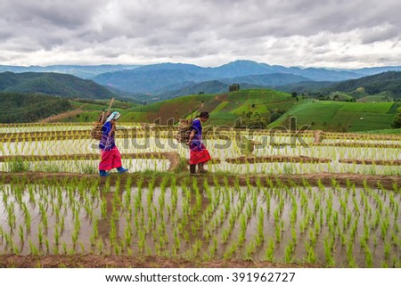Chiangmai , thailand - July 25,2015 : Unidentified Hmong woman with rice field terrace background on July 25 ,2015 in Chiangmai , Thailand - stock photo