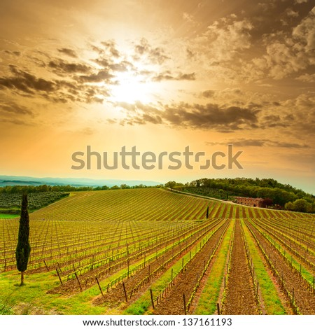 Chianti region, vineyard, trees and farm on sunset. Tuscany, Italy, Europe. - stock photo