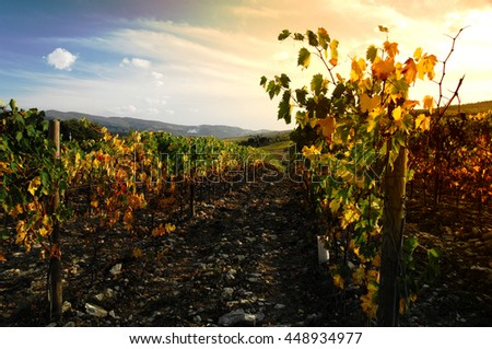 Chianti wineyards landscape in Autumn in Tuscany, Italy - stock photo