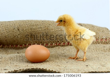 chick and egg, selective focus - stock photo