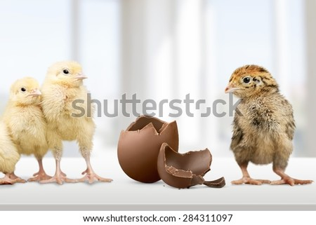 Chick, easter, chicken. - stock photo