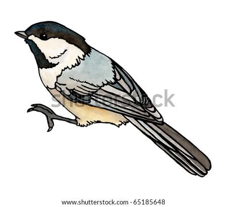 Chickadee isolated - stock photo