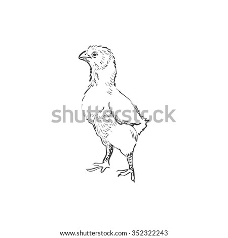 Chicken. Doodle style.  Isolated in white background.  - stock photo