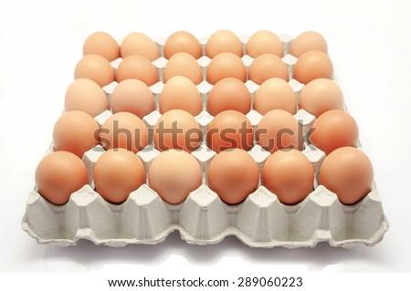 chicken egg - stock photo