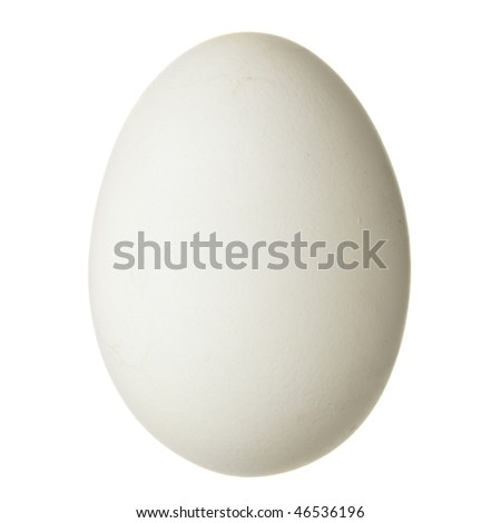 Chicken egg isolated over the white background - stock photo