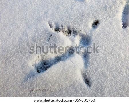 chicken footprint on snow - stock photo