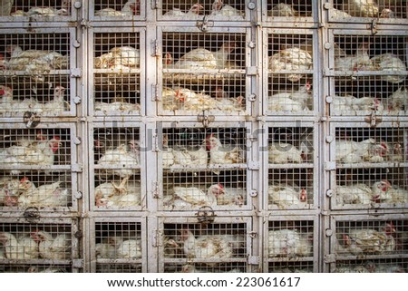 Chicken shop in India - stock photo