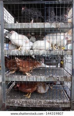 Chickens for sale in a tiny cage - stock photo