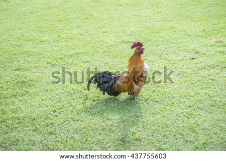 chickens on the grass - stock photo