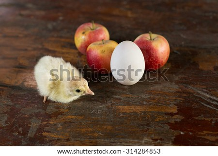 Chicks, eggs, apples on a wooden floor. - stock photo