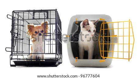 chihuahua and cat closed inside pet carrier isolated on white background - stock photo