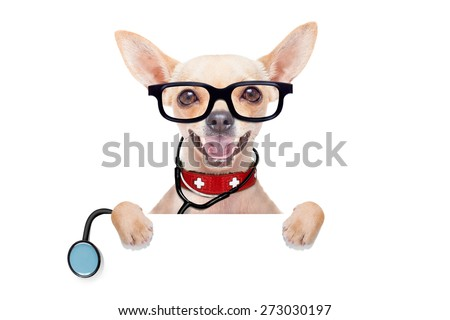 chihuahua dog as a medical veterinary doctor with stethoscope and first aid kit behind a white and blank banner ,isolated on white background - stock photo