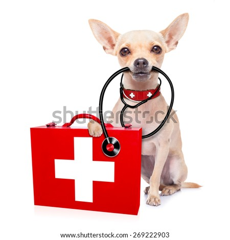 chihuahua dog as a medical veterinary doctor with stethoscope and first aid kit ,isolated on white background - stock photo