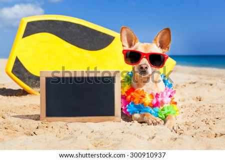 chihuahua dog  at the beach with a surfboard wearing sunglasses and flower chain on summer vacation holidays  at the beach , with empty blank blackboard or banner - stock photo