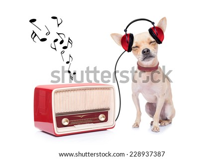 chihuahua dog listening music, while relaxing and enjoying the sound of an old retro radio, isolated on white background - stock photo