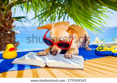 chihuahua dog reading a book and relaxing under the palm at the beach , enjoying the summer vacation holidays - stock photo