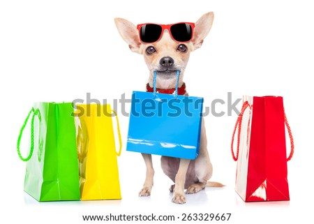 chihuahua dog with shopping bags ready for discount and sale at the  mall, isolated on white background - stock photo