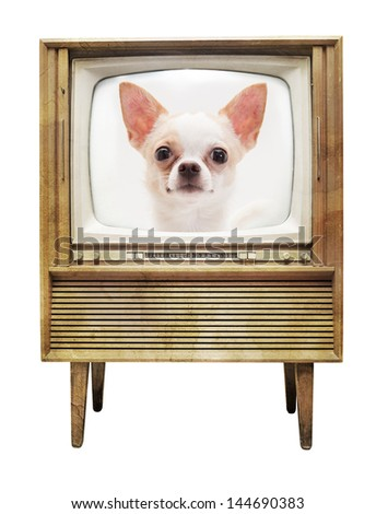 Chihuahua on television isolated on white background - stock photo