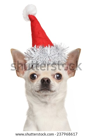 Chihuahua puppy in Christmas red hat isolated on white background - stock photo