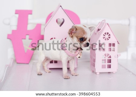 Chihuahua puppy near pink decorative houses  - stock photo