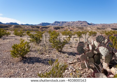 Chihuahuan Desert landscape of Big Bend Ranch State Park, Texas, US, with creosote bushes and purple prickly pear cactus on rocky ground - stock photo