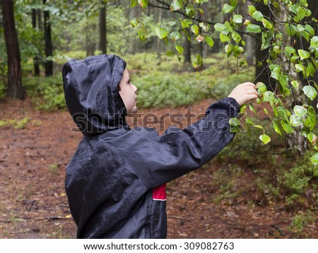 Child boy in forest exploring wet leaves of a birch tree - stock photo
